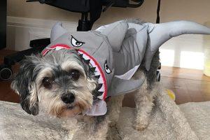 halloween 2017 shark